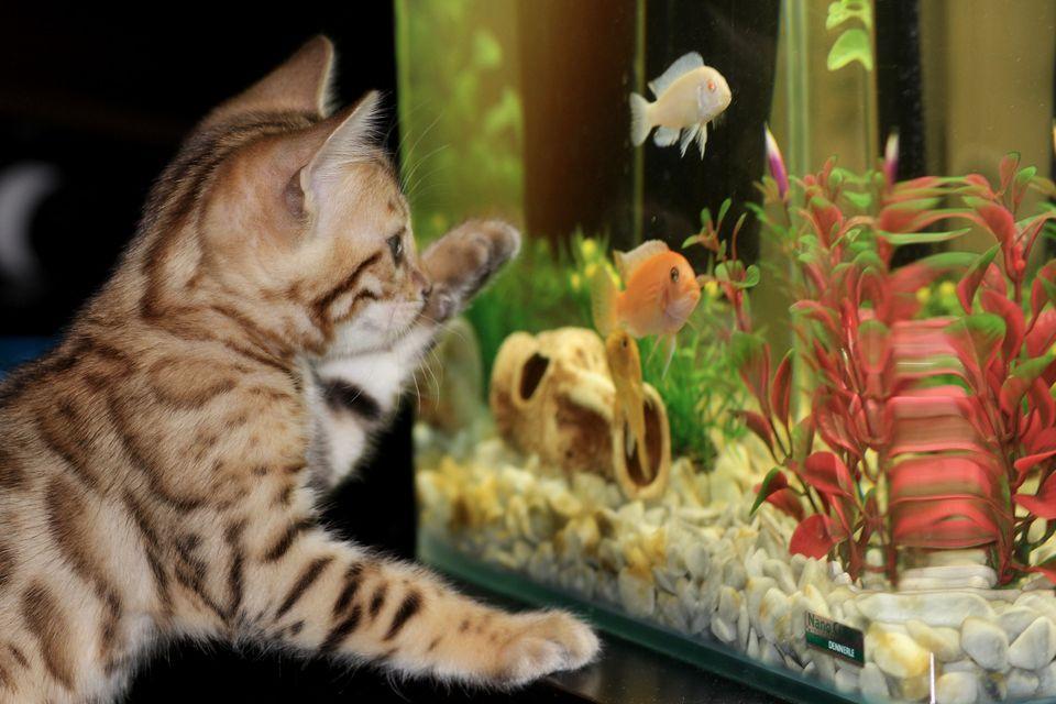 Home fish aquarium