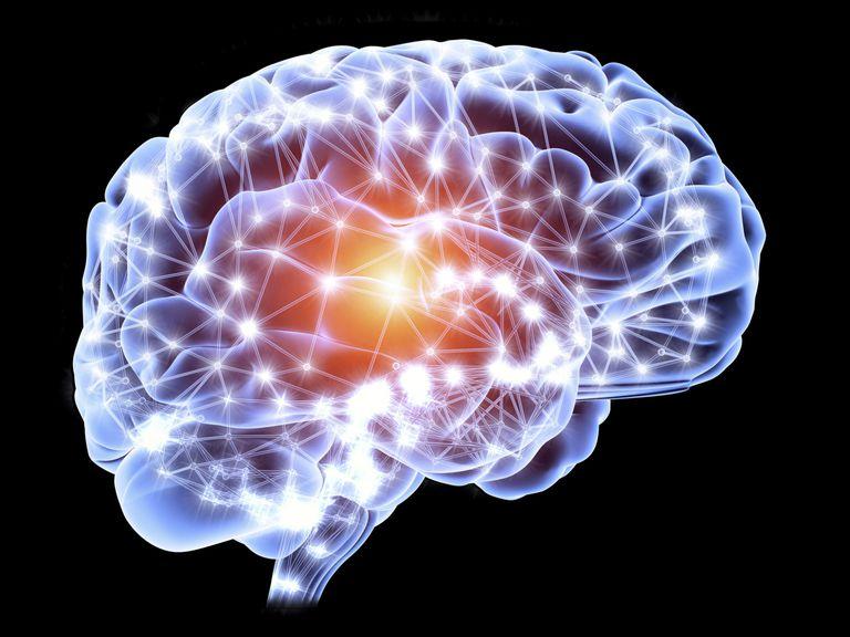 the brain's neural network