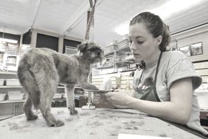 Small dog being groomed in dog grooming salon