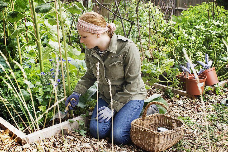 organic garden resized 56a6d3243df78cf f7c