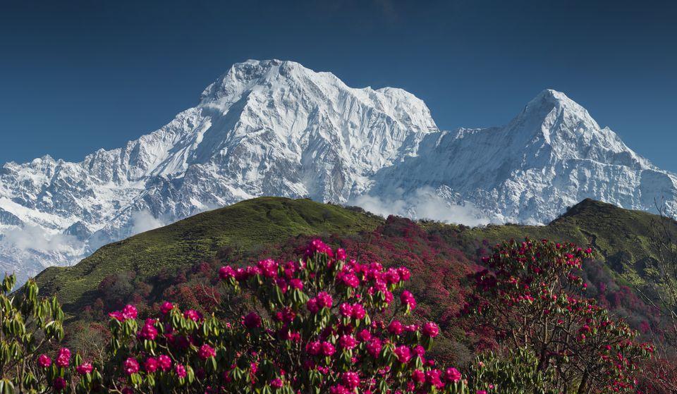 spring flowers blooming in Nepal