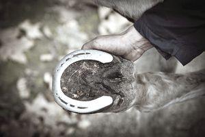 Groom inspects horseshoe