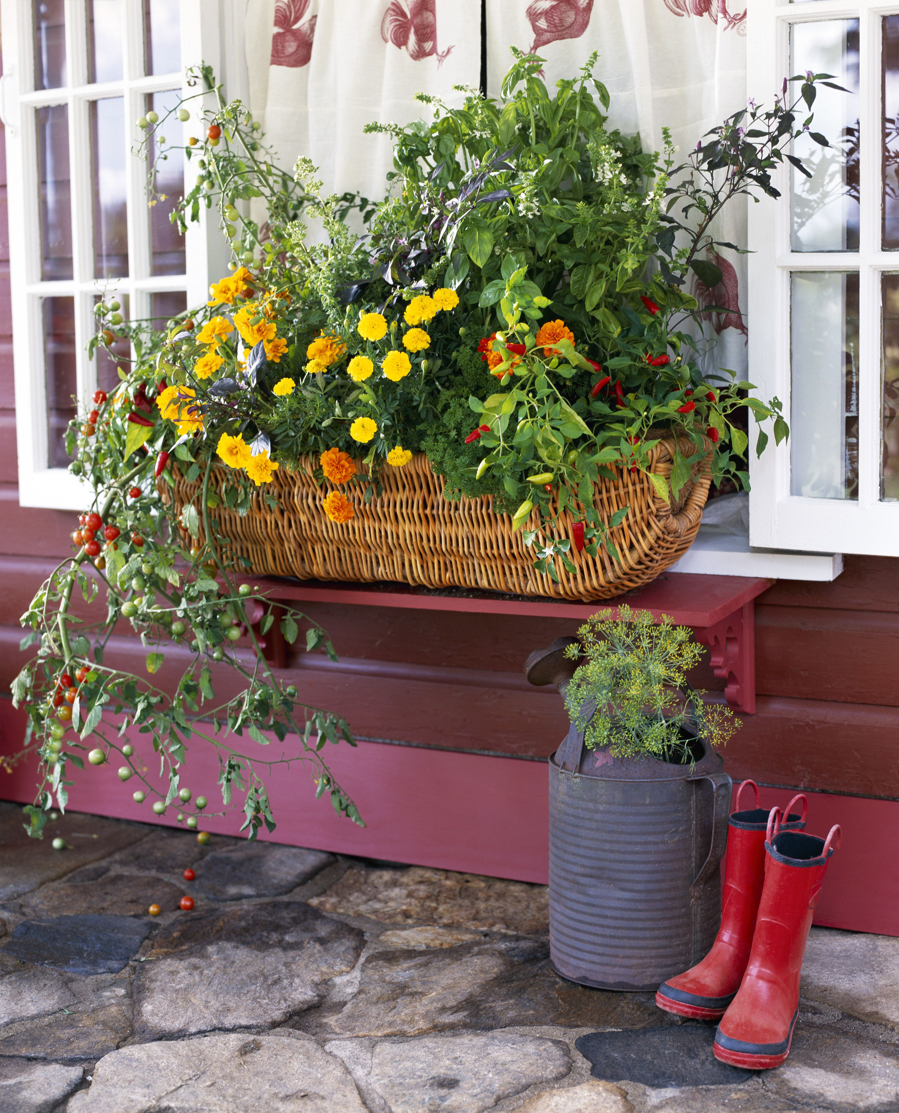Flowers for Sunny Window Boxes