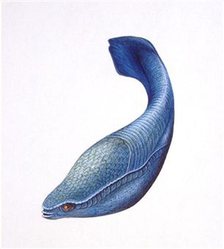 Prehistoric life during the devonian period ordovician period sciox Gallery