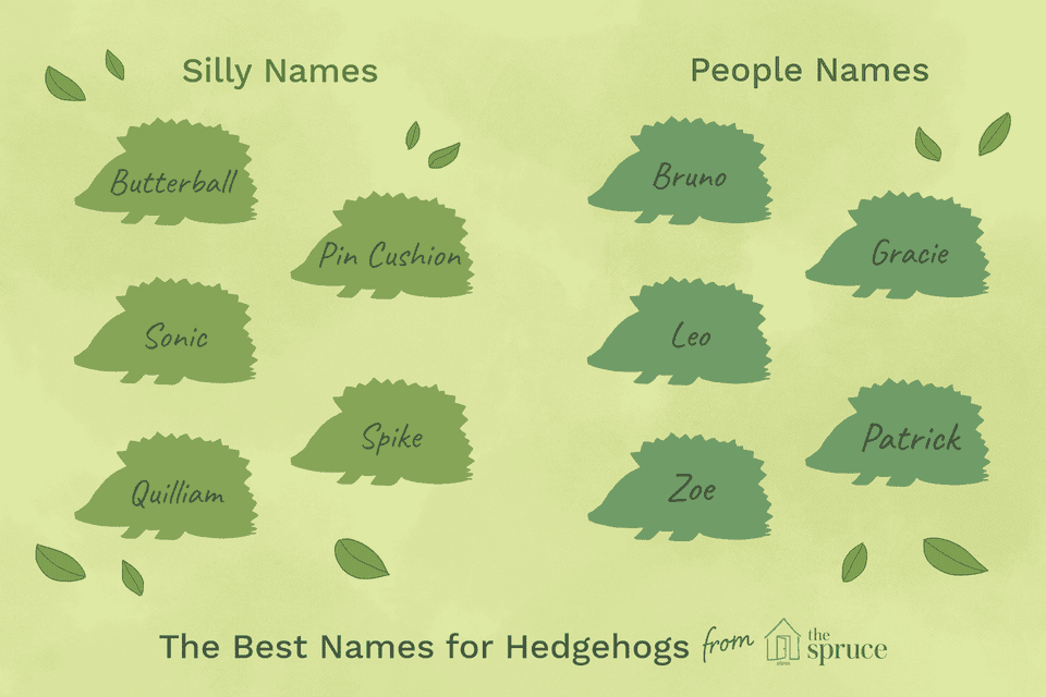 Illustration depicting names of hedgehogs