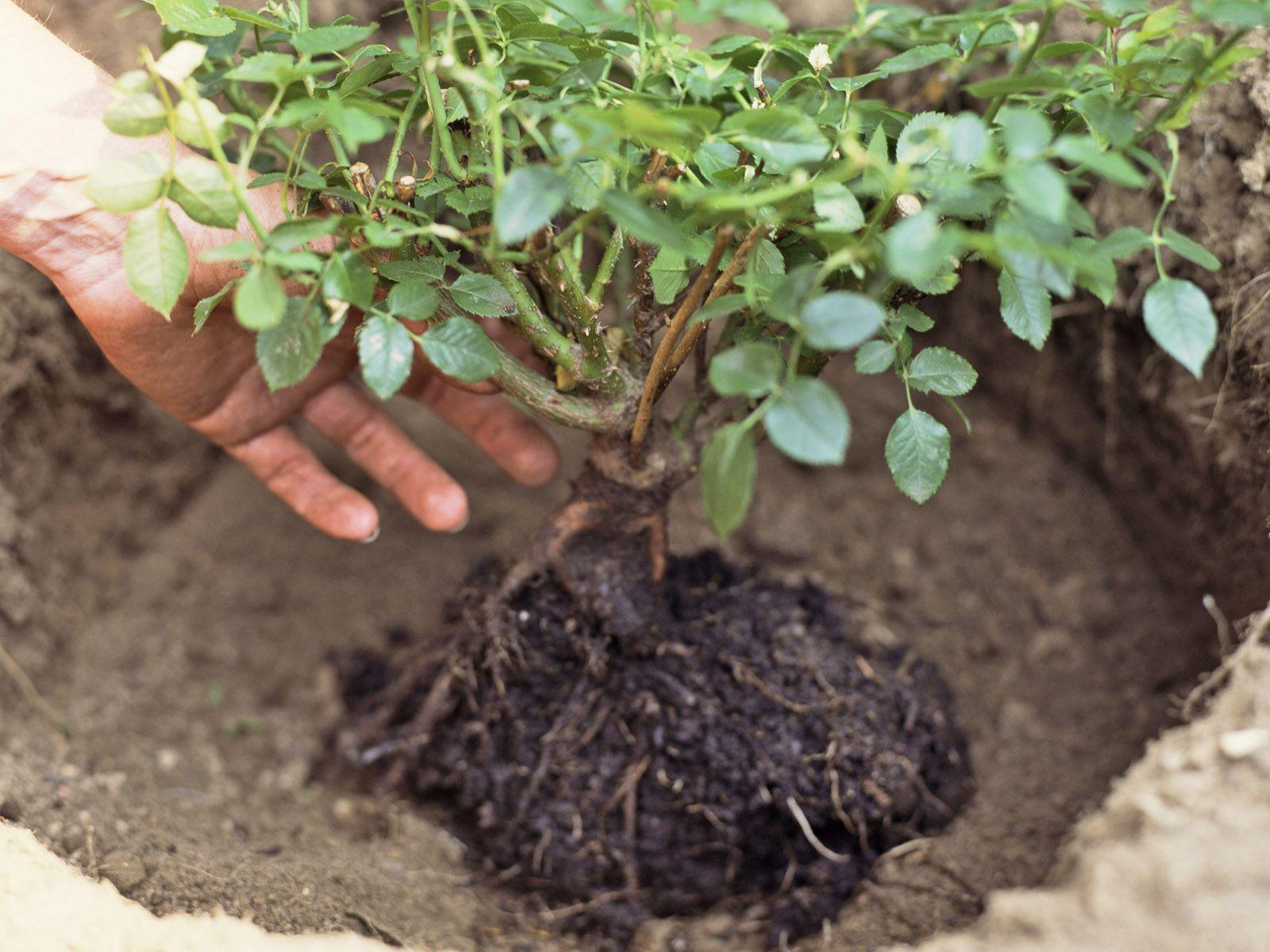 Painting Dry Bush Ideas