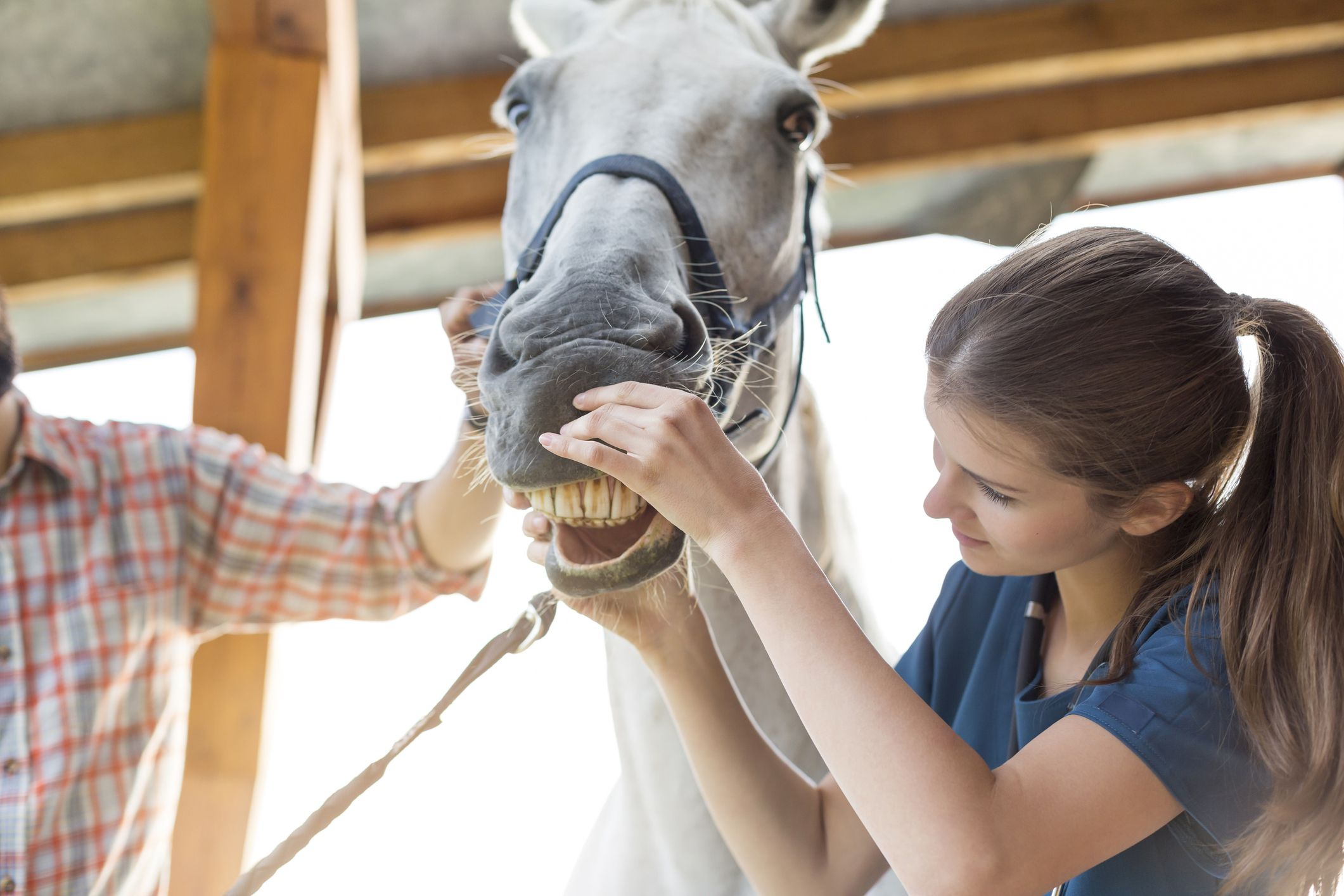 What Does It Mean To Float Teeth Horse Dental Care