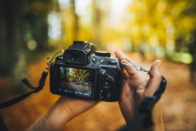 Camera shooting in the forest