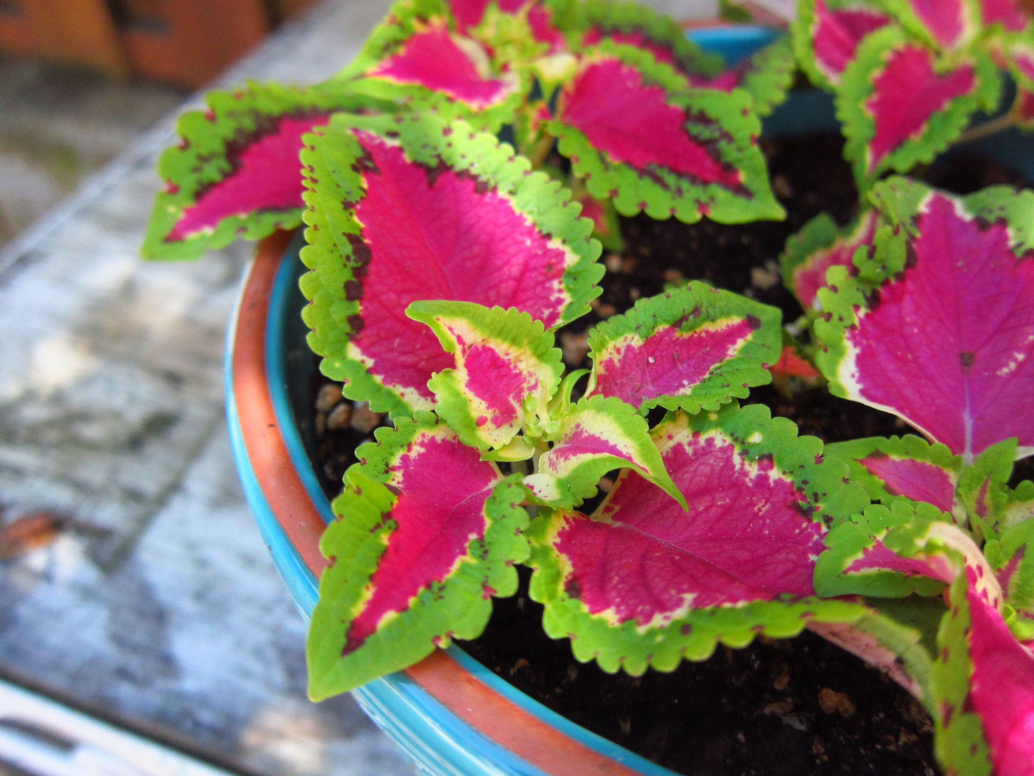 top 10 outdoor plants that thrive indoors ForPlants For Outdoor Garden