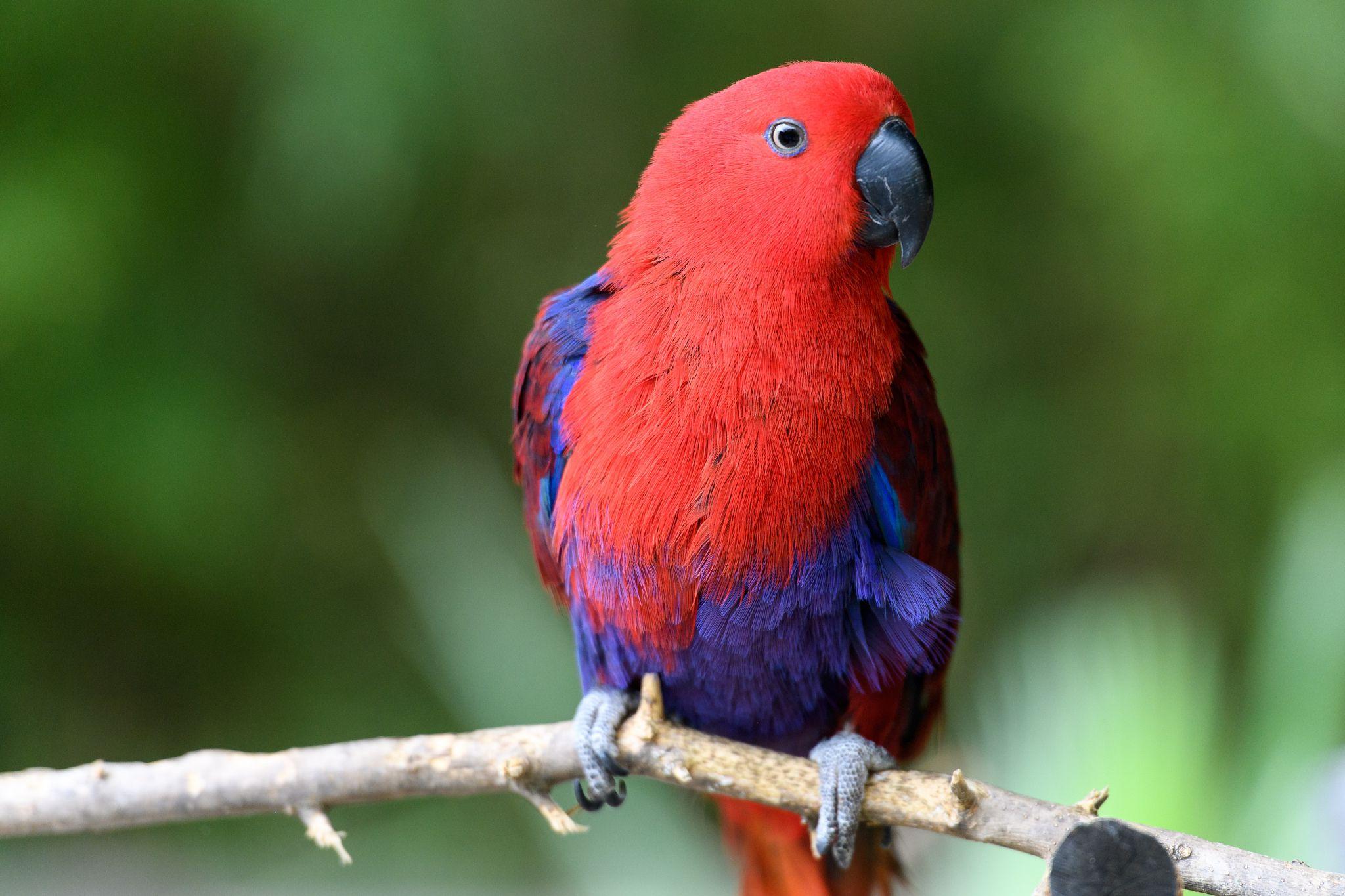 top 5 popular large parrots