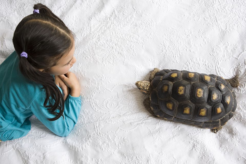 Girl with tortoise
