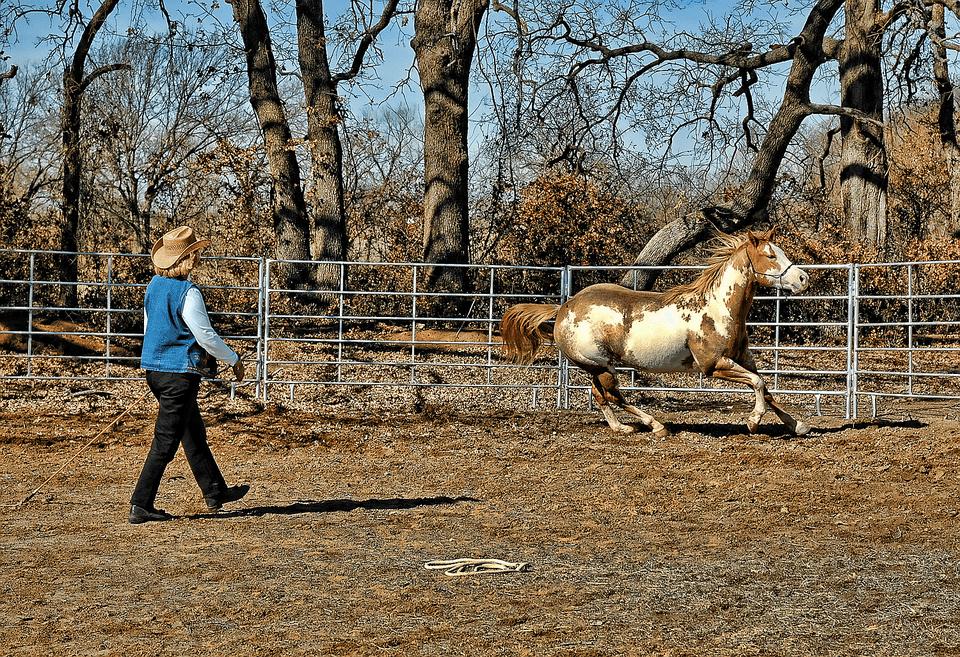 Woman rancher trains her paint horse