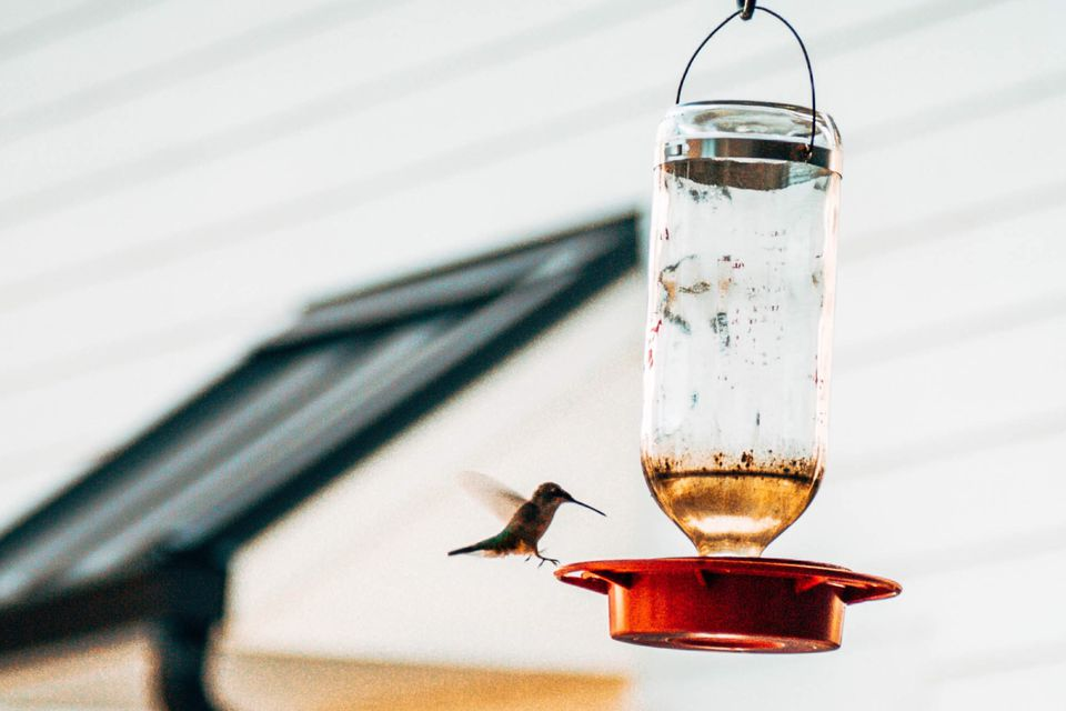 Dirty hummingbird feeder