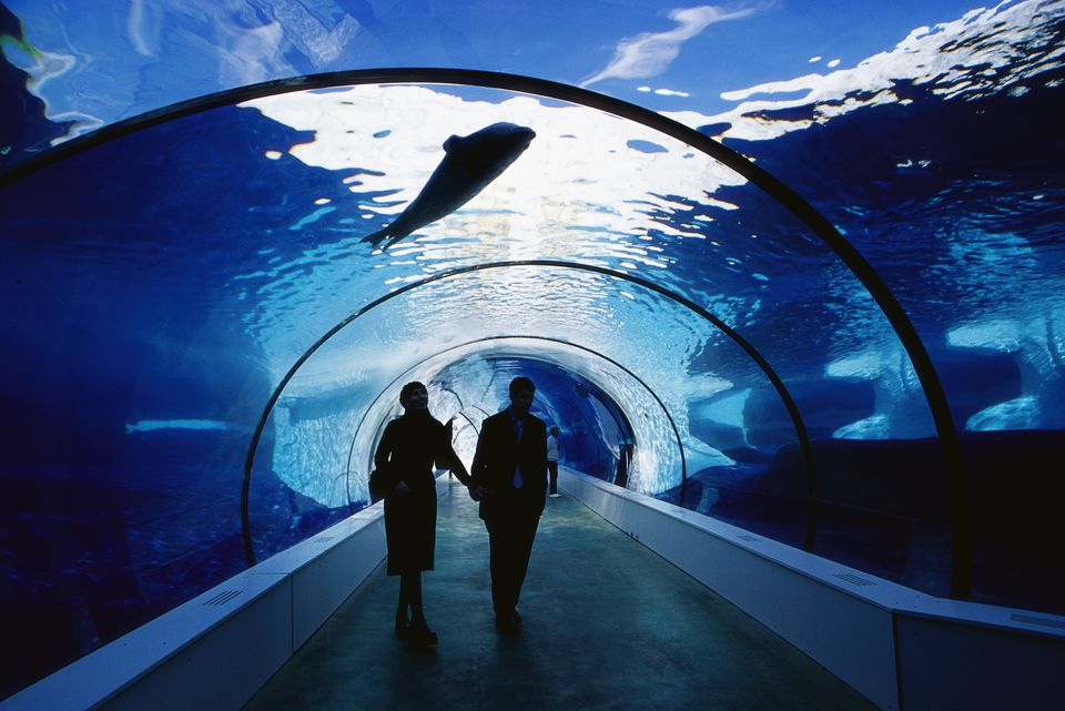 Couple Walking in Underwater Tunnel