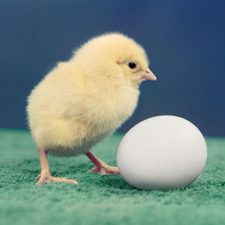 Chick and Egg Explanation
