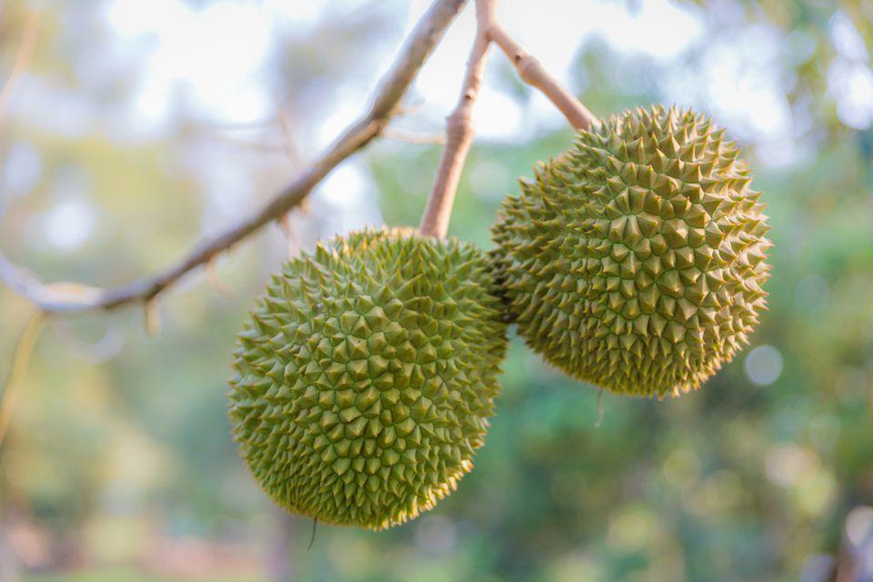 Durian Fruit