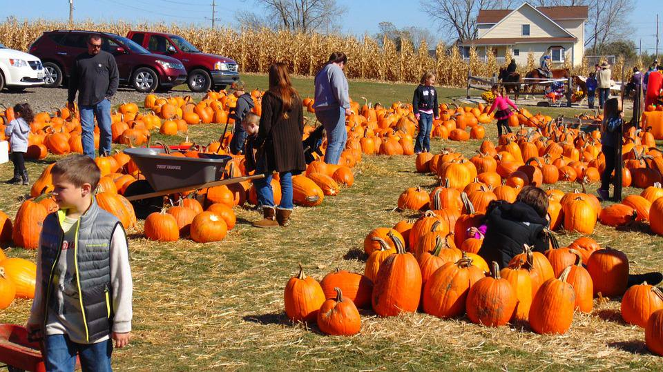People milling around pumpkin patch