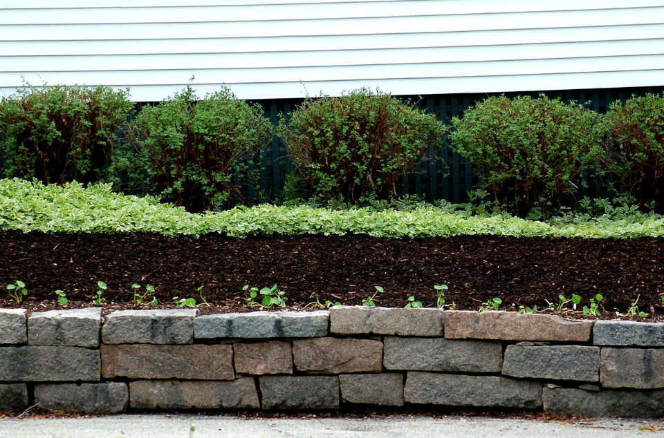 Image of mulch and shrubs along a house foundation.