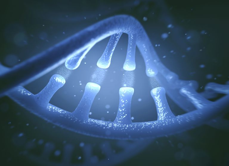 Dna structure and function essay