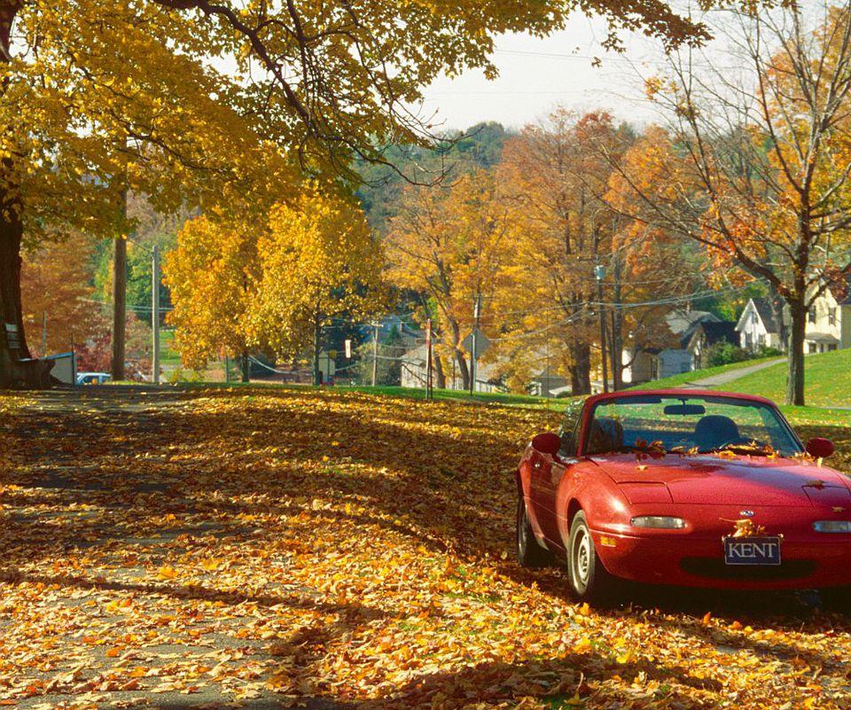 Litchfield Fall Foliage