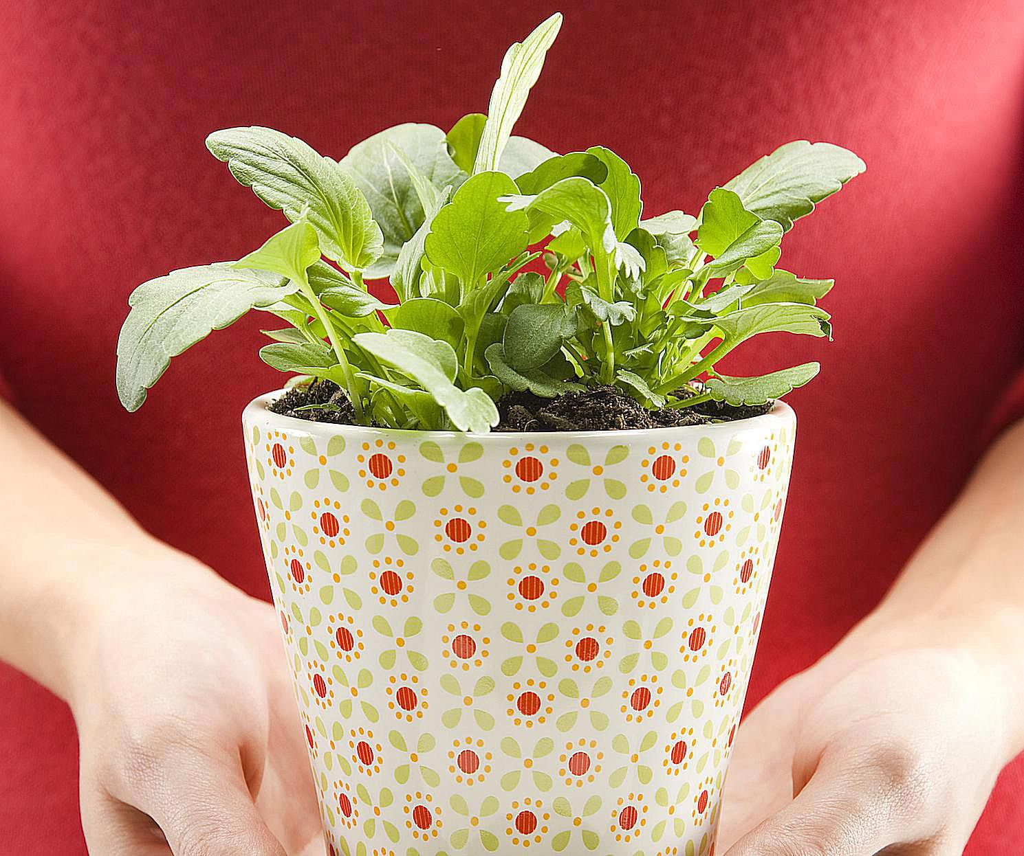 Feng Shui Use of Plants in the Bedroom  Just Say No. What Is the Feng Shui of Plants in the Bedroom