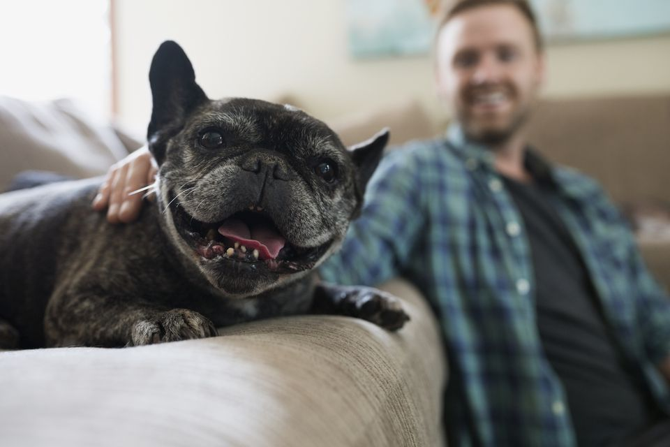 Portrait smiling dog with man on sofa