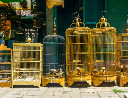 should animal and birds be caged Should my caged bird have a bath  a bird bath is a popular outdoor fixture that wild birds enjoy, but what about your pet cage bird  small animal reptile .