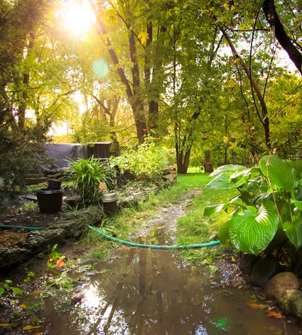 How much water do annual flowers need for Yard flooding problems
