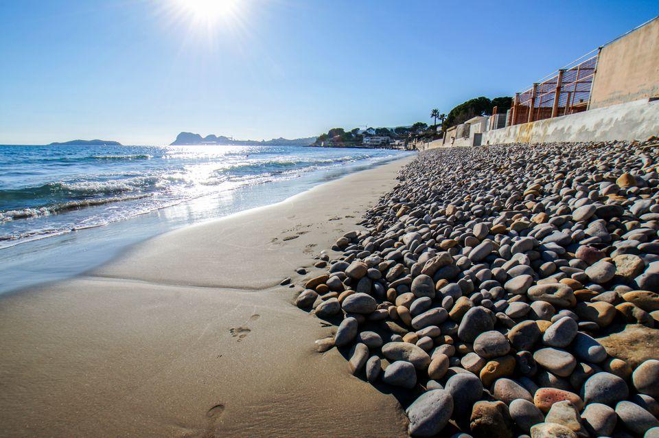 BeachRex