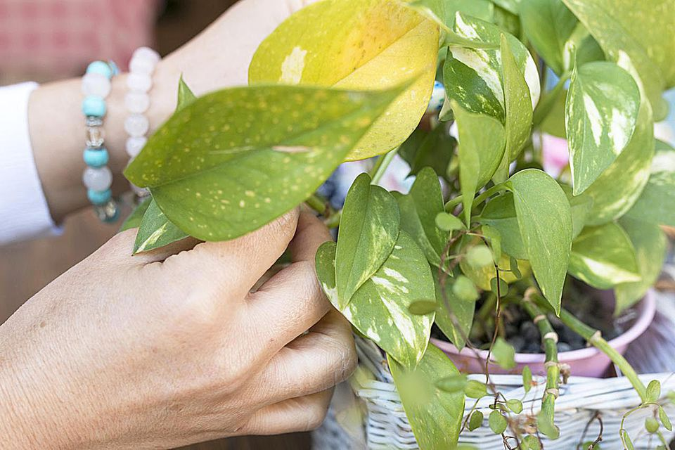 Fertilizer Basics and How to Feed Indoor Plants