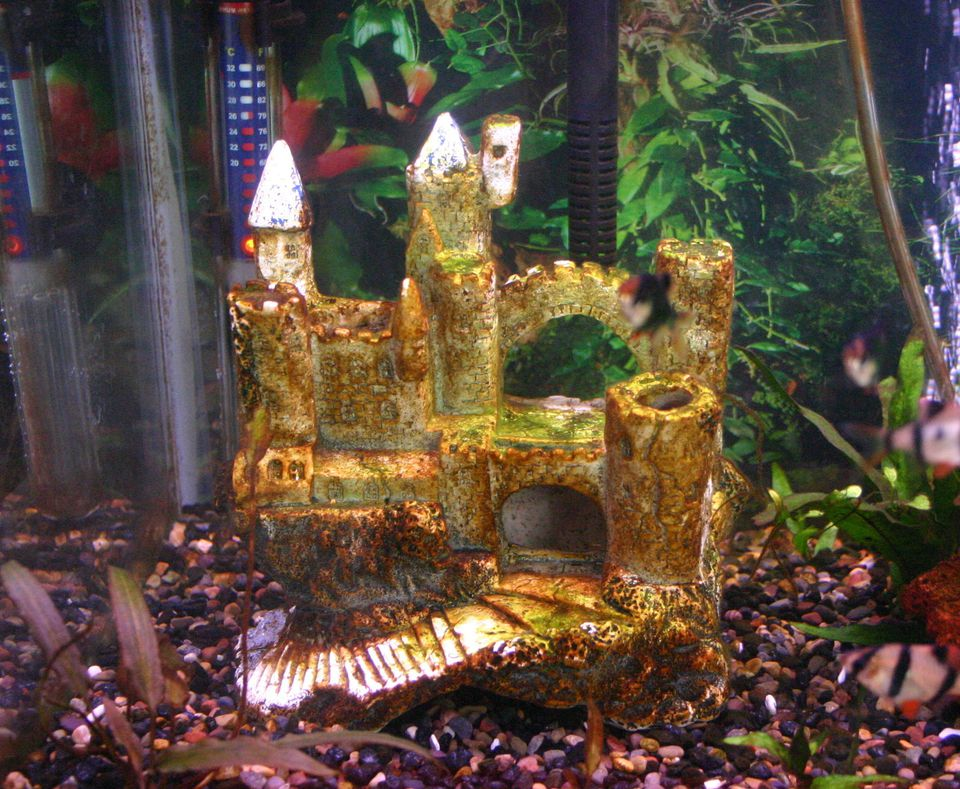 Causes and cures for brown algae in aquariums for What causes algae in fish tanks