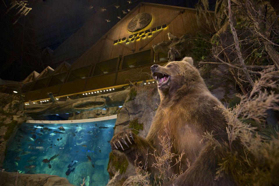 Grand Cypress Lodge's lobby has sharks andalligators