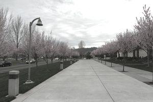 Sonoma State Campus