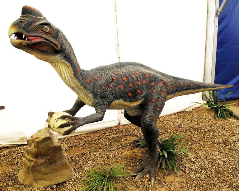 oviraptorWC-56a254ea5f9b58b7d0c91f4a.JPG