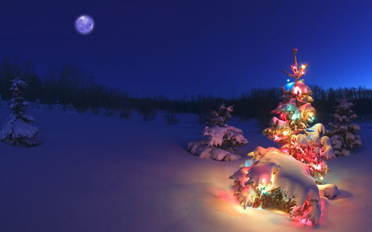 Holiday Tree In Snow Wallpaper