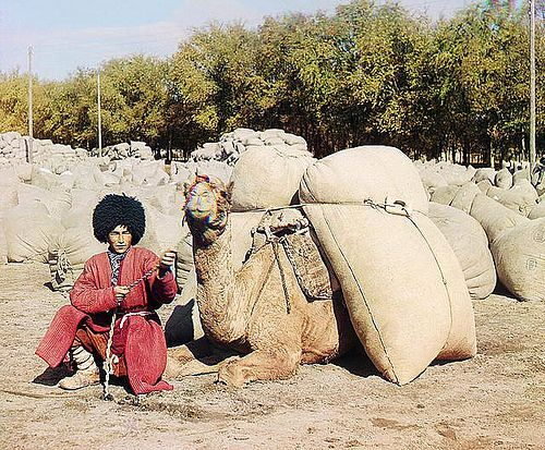 Turkmenstan, c. 1905-1915. A man and his camel take grain to market.