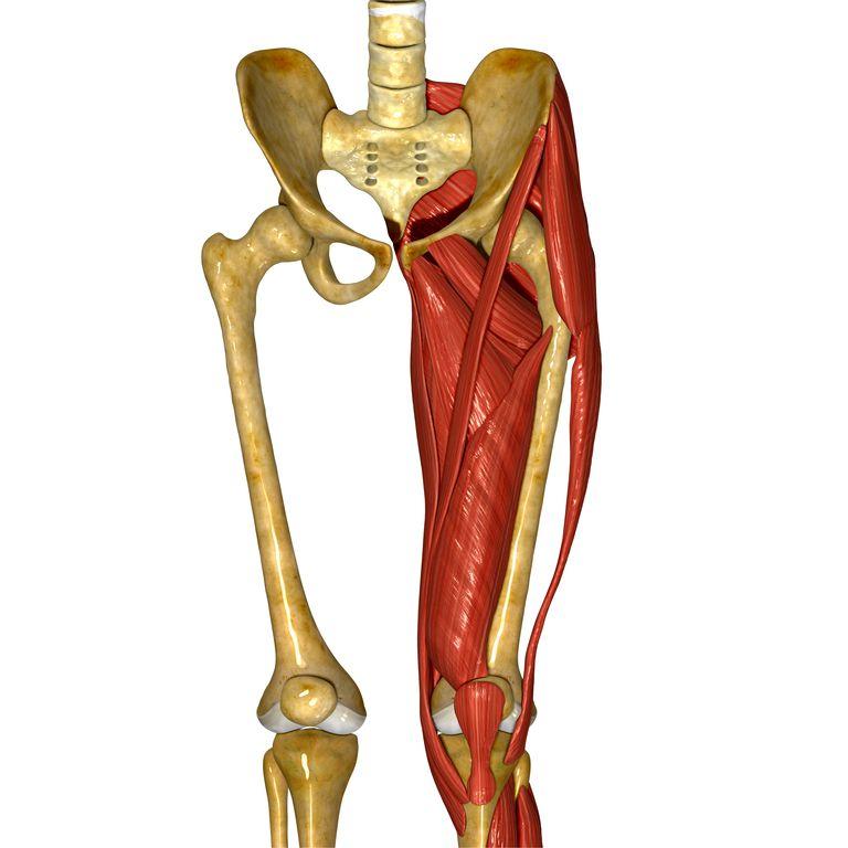 Inner Thighs Deserve Flexibility