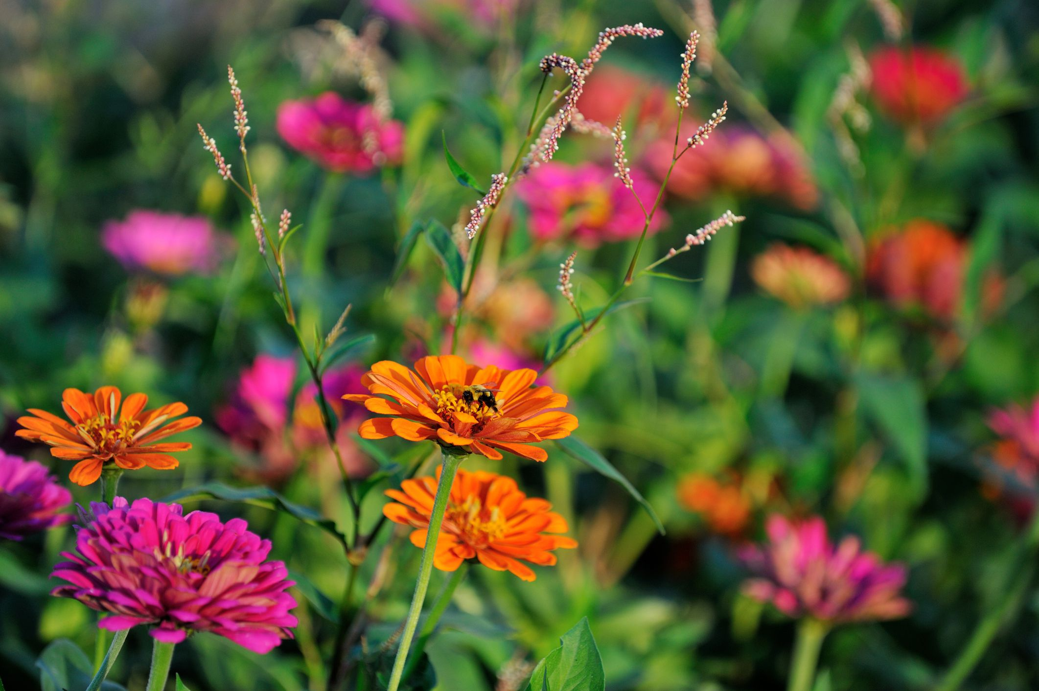 What is an annual flower or plant definition izmirmasajfo Gallery
