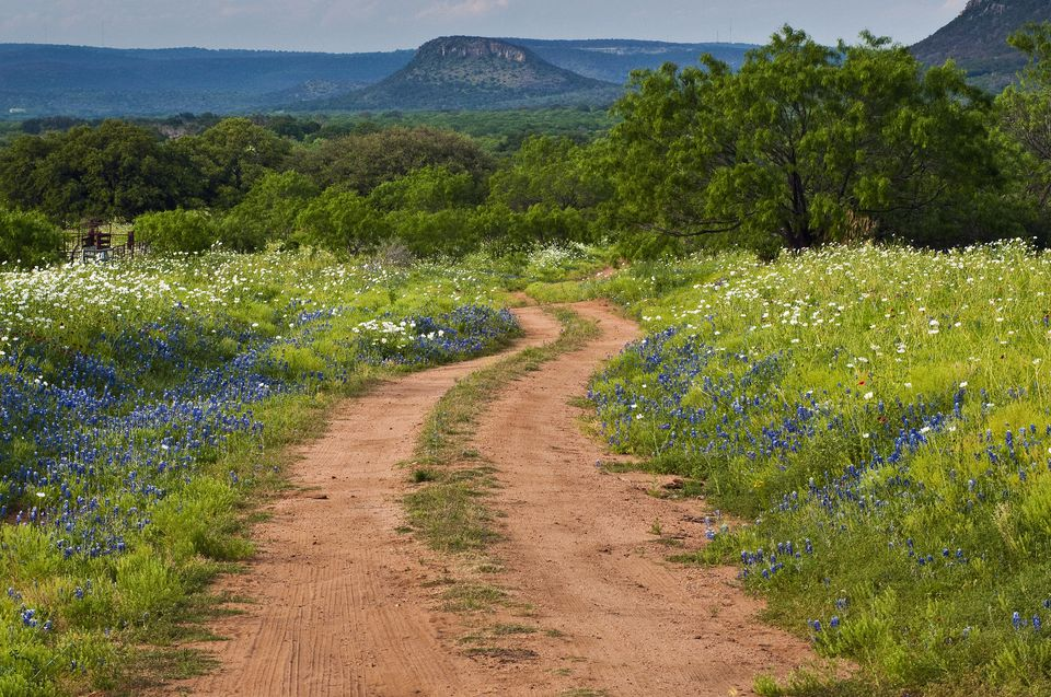 Wildflowers at dirt road in Texas Hill Country