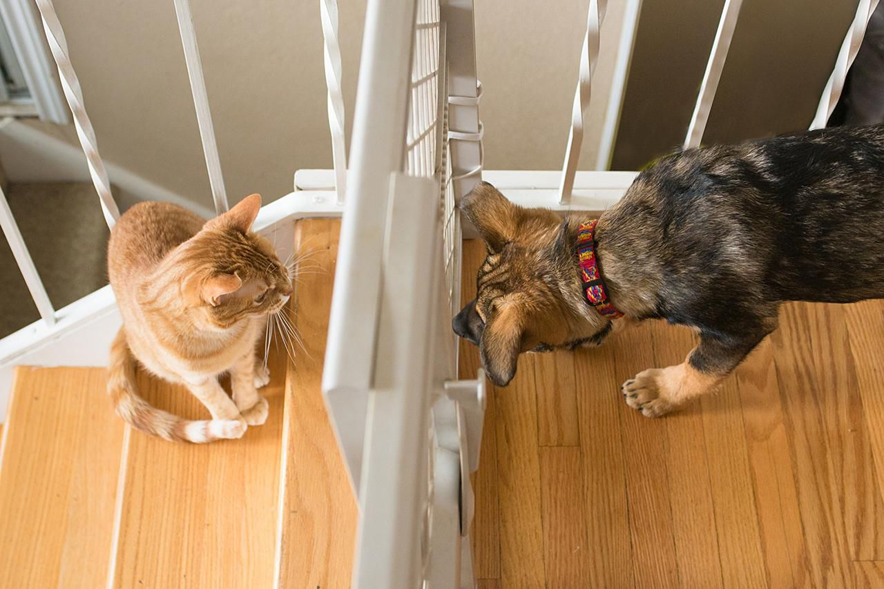 Getting Cats And Dogs To Coexist