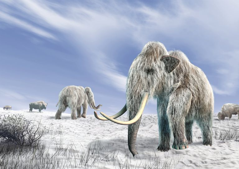 Woolly mammoths, artwork