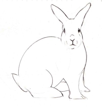 how to draw a bunny drawing the rabbits face