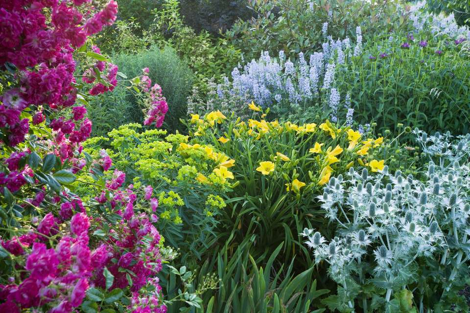 Large flower garden care large perennial flower garden mightylinksfo
