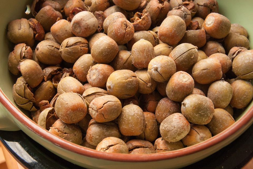 A guide to cold leaching and preserving acorn flour for How to preserve acorns