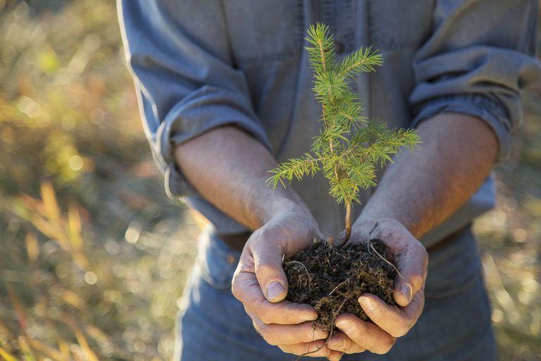 Man cupping tree sapling