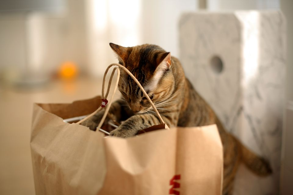 Cat search
