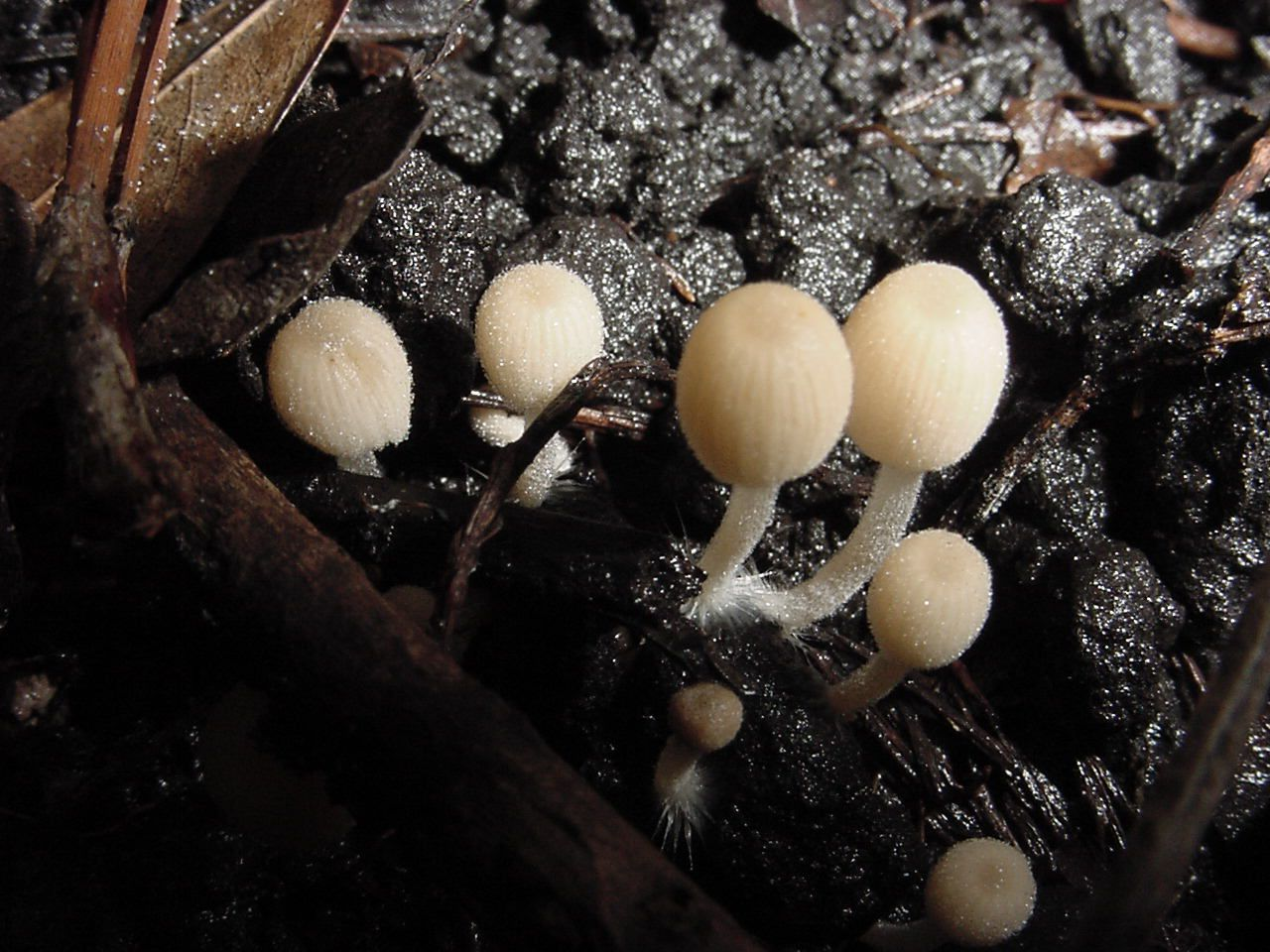 Types Of Mushrooms Guide To Cultivated Mushrooms