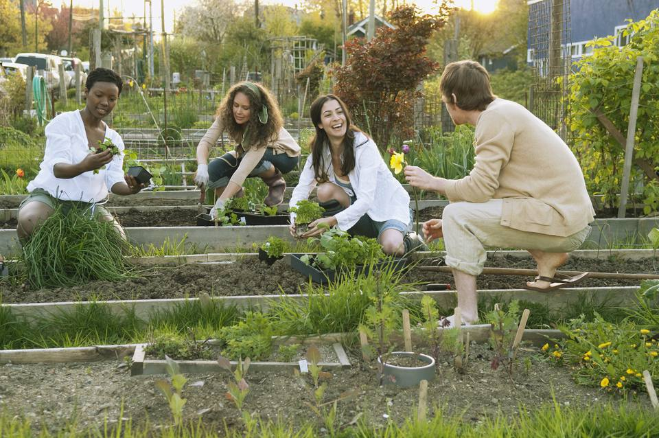 People working in a community garden