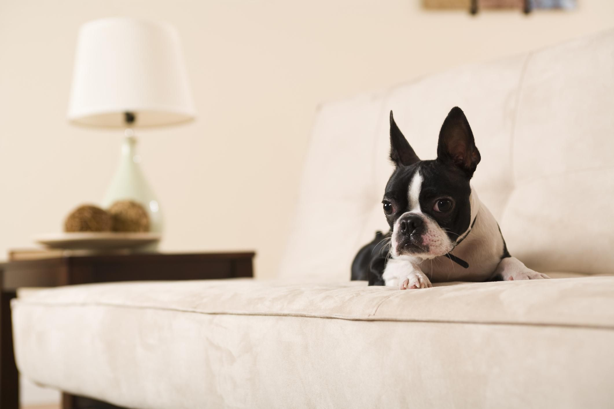 Top 2 Couch Upholstery Choices for Cat and Dog Owners