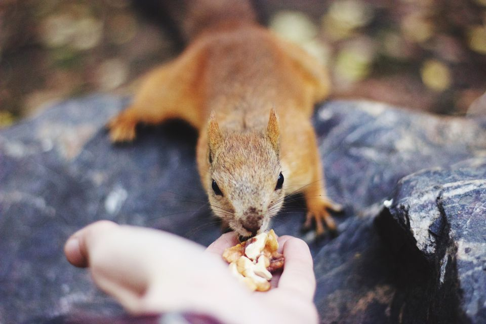 facts about rabies squirrel eating from a persons hand